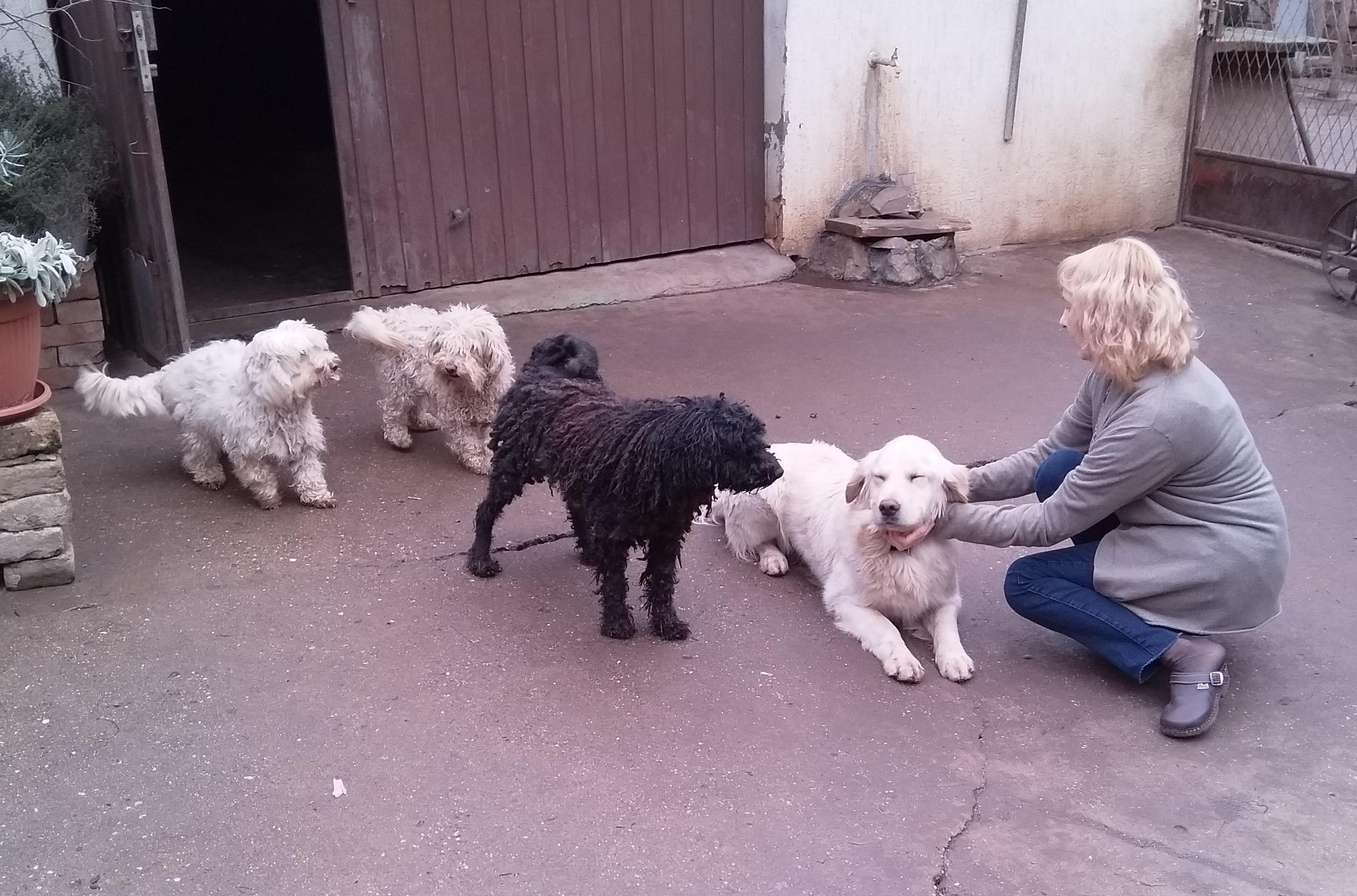 Kóborka a kóbor kutyákért