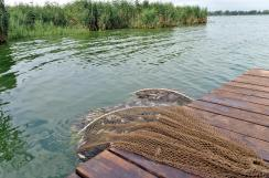 A Palics Ludas Közvállalat a szelektív lehalászással többek között az ezüstkárász számát csökkenti