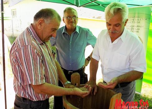 Sóti Ferenc és Nagy Miklós a búza minőségét vizsgálja (Szögi Csaba felvétele)