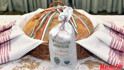 Szombaton tartják Szarvason a Búza Összeöntés Ünnepét (Szögi Csaba felvétele)