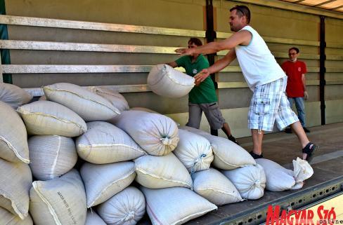 Az idén 20,5 tonna búzát gyűjtöttek össze (Gergely Árpád felvétele)